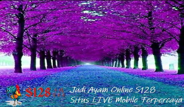 Judi Ayam Online S128 Situs LIVE Mobile Terpercaya